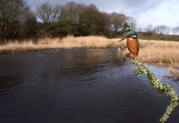 Kingfishers view