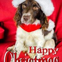 Springer Christmas card