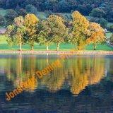 S007-Coniston Autumn Trees
