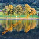 T005-Coniston Autumn Trees