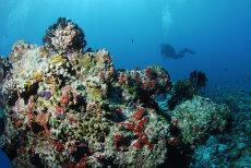 Reef top, Maagiri Thila