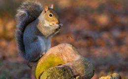 Squirrel in Richmond Park