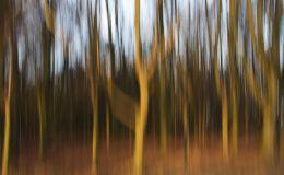 Impressionist Trees