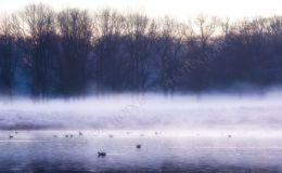 A Misty Dawn