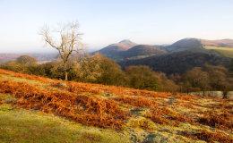 Winter Morning on Ragleth Hill