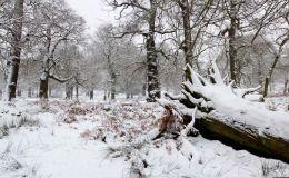 Winter In Richmond Park