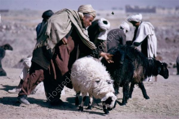 Sheep Farmers, Camel Market, Kabul