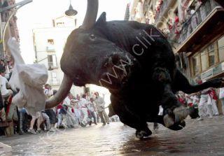 Bull charge, Spain