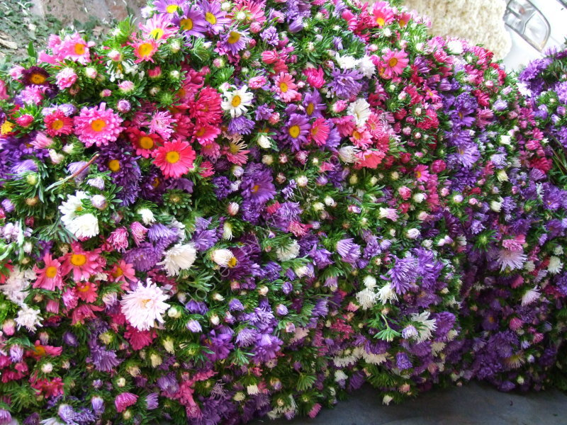 Asters at Maymyo Flower Market