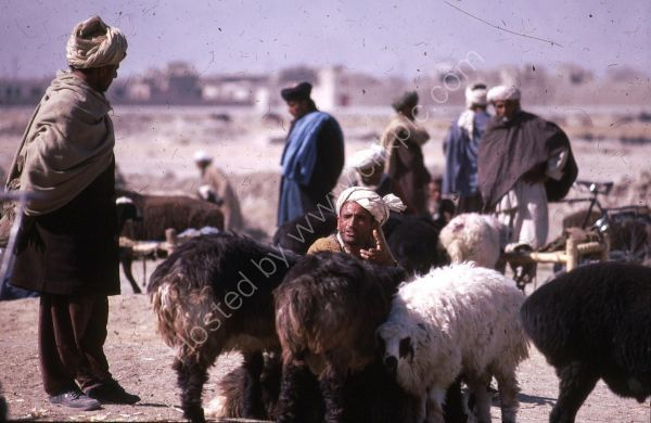 Afghani Farmer Negotiating a Sheep Sale, Camel Market, Kabul