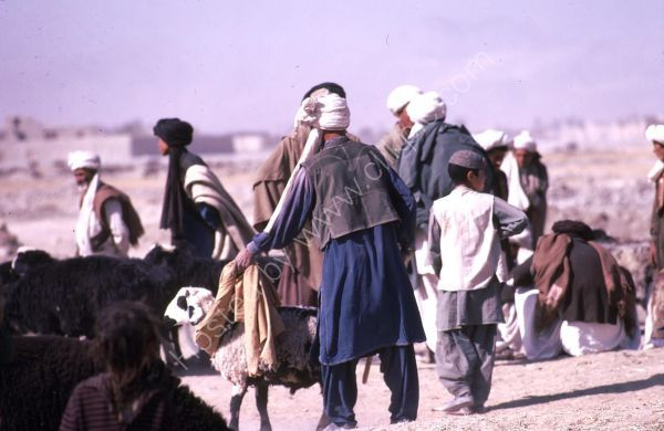 Afghani Farmer with Sheep, Camel Market, Kabul