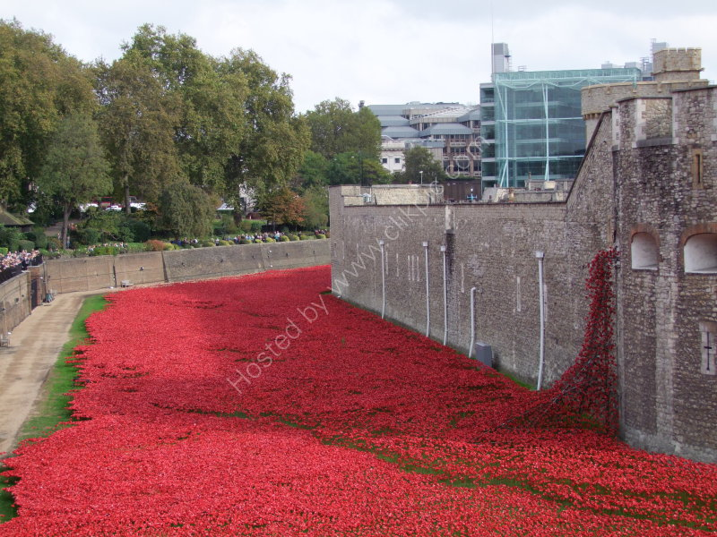 Field of Ceramic Poppies, Tower of London