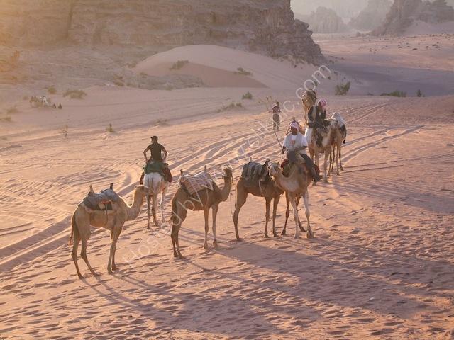 Camel Train in Sunset, Wadi Musa