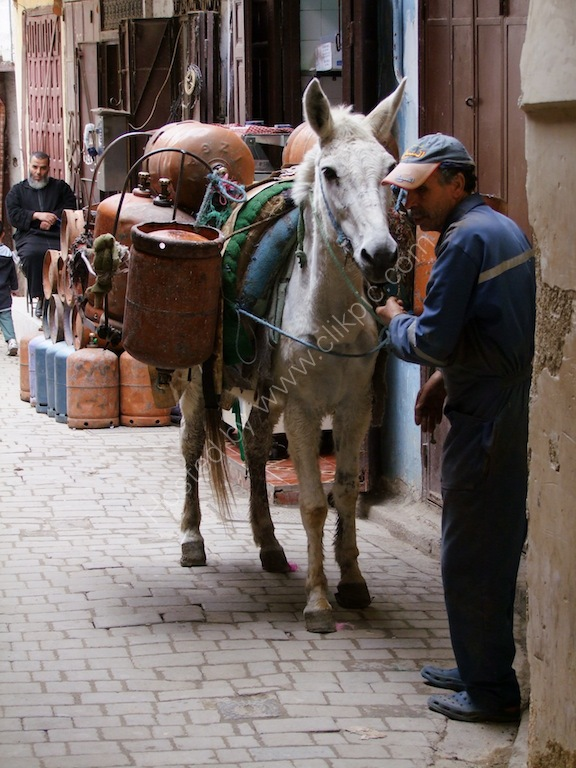 Working Horse, Fes