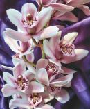Orchids In Detail