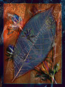 Abstract Leaf and thistles.