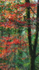 Tree Dream In Red