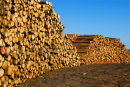 Forestry Log Piles