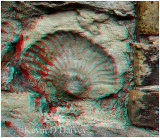 Fossil used in wall of the oldest house in New Romney.