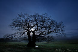 Night-Oak