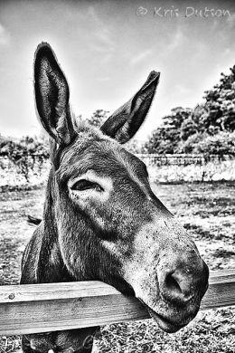 Hey, Donkey - Mono
