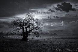Misty Oak - Mono