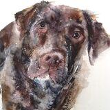 Aury dog...