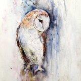 BARN OWL Dusk till dawn