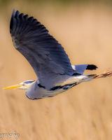 Heron - abstract