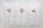 Three Dried Roses 2