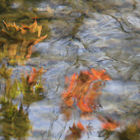 Autumn Reflections #3