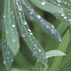 Dewdrops on Grass