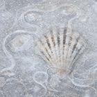 Frosty Seashore
