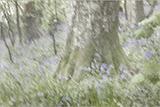 Impressionist Bluebell Woods