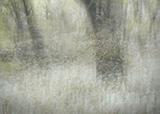 Impressionist Woods