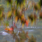 Autumn at Lukesland Gardens 4