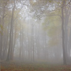 Mist among the Trees