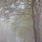 Mist at Lukesland