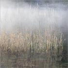 Mist on the Lake #3