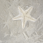 Star Fish in the Frost
