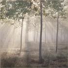 Sunbeams in the Misty Woods