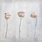 Three Dried Roses