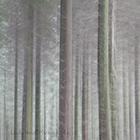 Trees at Cornwood