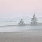 Two Trees in the Mist