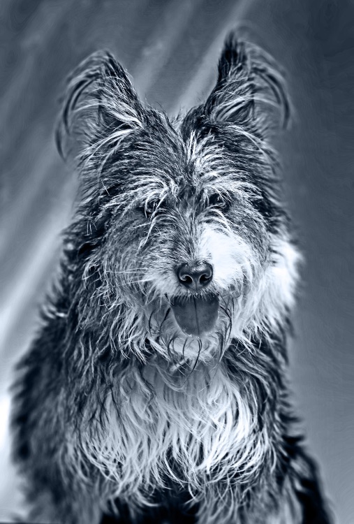 dogs-8332 BW