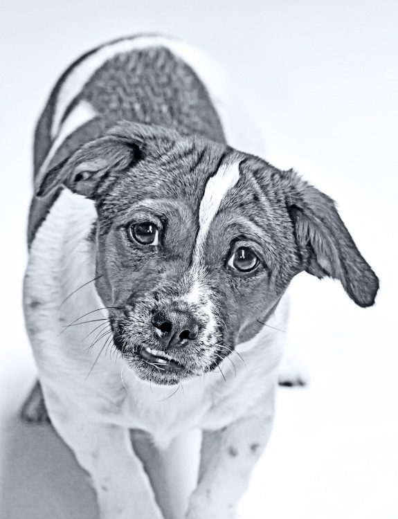 dogs-8356 hdr BW