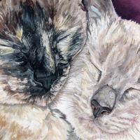 Untitled Cat Pet Portrait