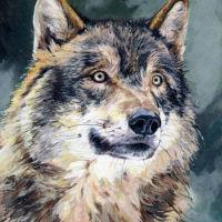 'Wolf Reflects'