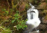 Owengarriff River, Kerry Way, Killarney National Park, Kerry