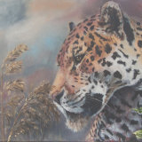 Jaguar, by Charmian Hayes